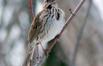 Club d'ornithologie de la région des Moulins (CORDEM)