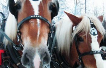 Club des Routiers Équestres
